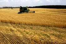 Chumrau on Wheat: Inconsistent Weather Causes Quality Concerns