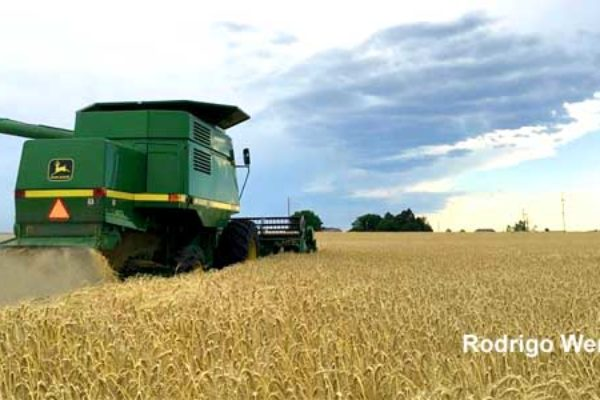Wheat Market: U.S. Production to Fall to Lowest Level Since 2002-03