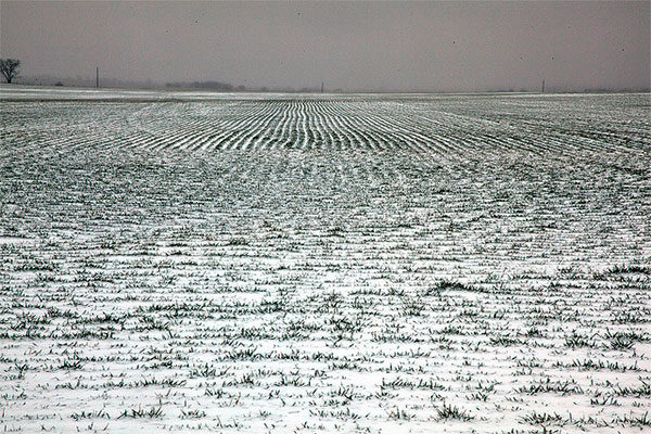 Louisiana: Sugarcane, Wheat Crops Withstand Freeze