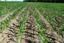 Mississippi: ASA Annual Agronomy Meeting, Grenada, Nov. 15